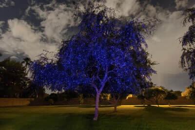 Blue-Laser-Tree