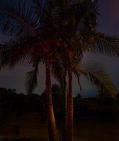 illuminator-laser-lights-by-sparkle-magic-cr-1425266591-jpg